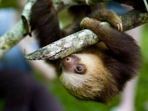 cropped-Cute-Sloth-1024x768.jpg