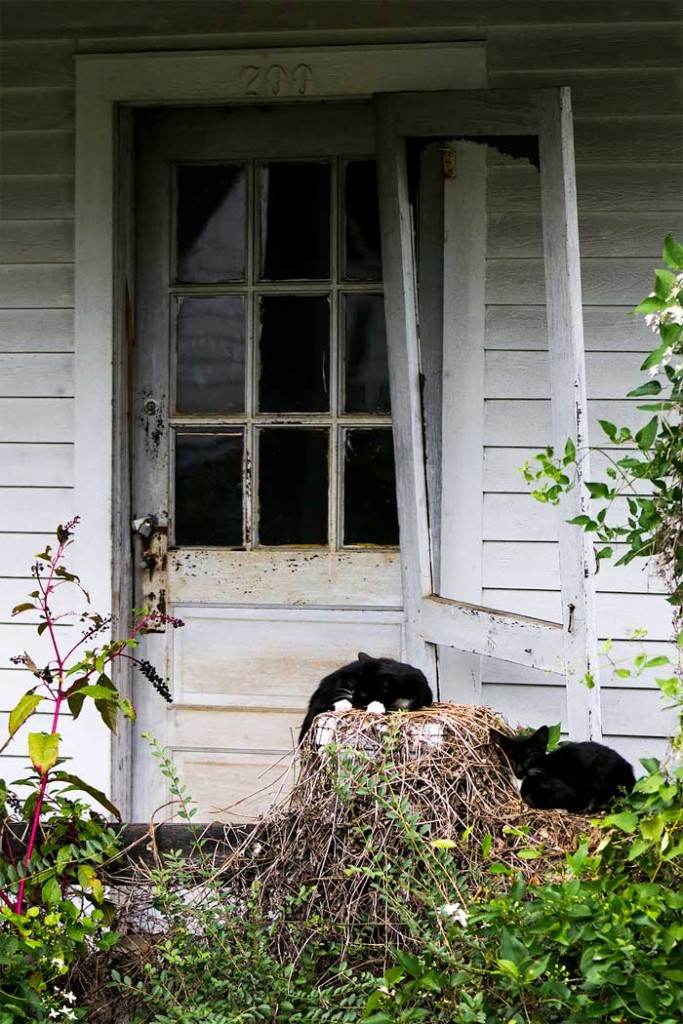 sarah_charlton_04_weathered-entry-with-cats