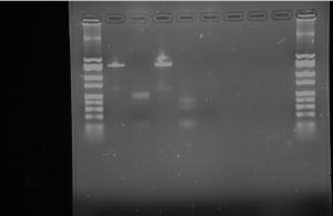 gel bio250