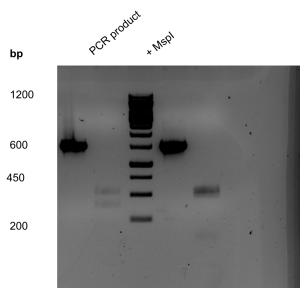 pcr and mspi
